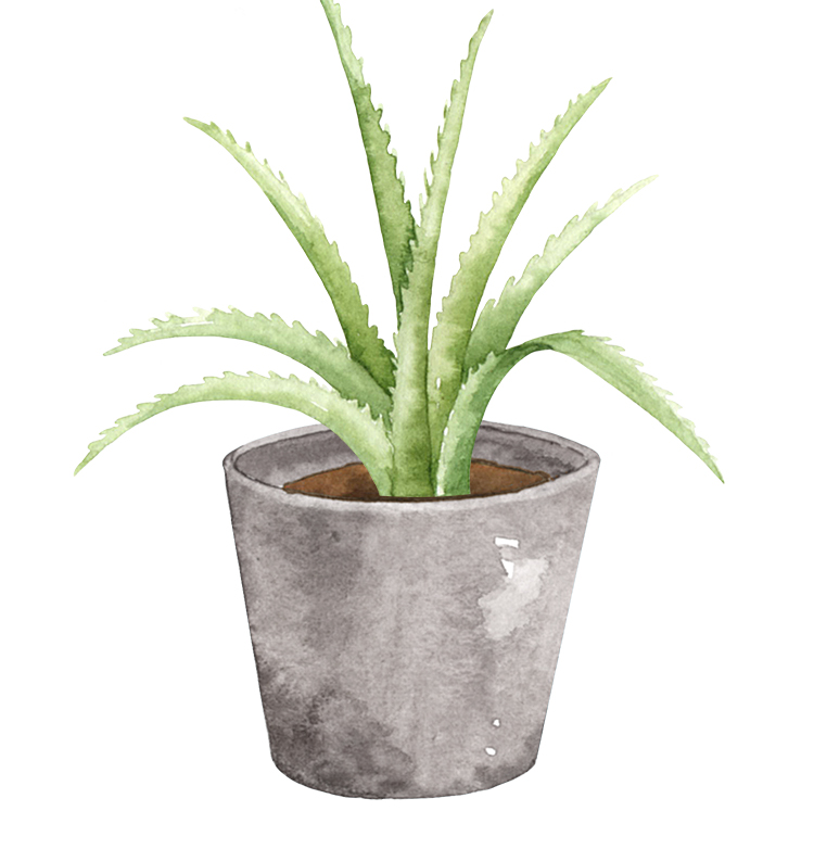 Aloe vera for your patio space.