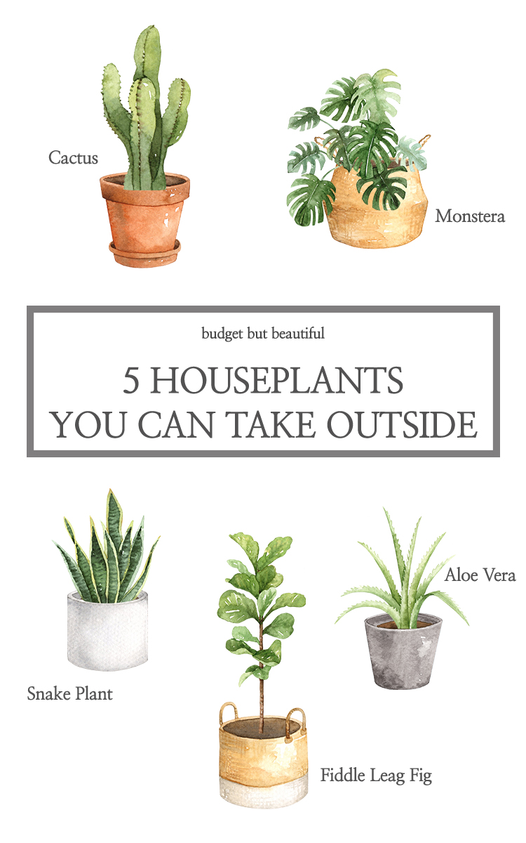 Plants you can use inside and outdoors in the summer