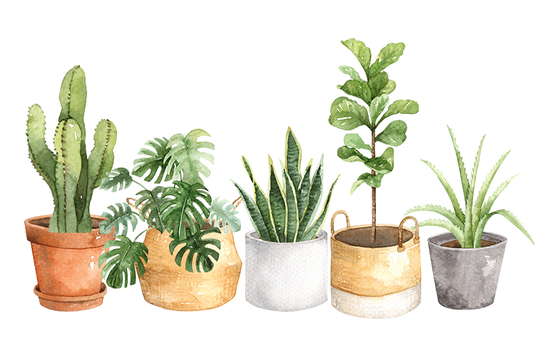 Indoor house plants for your outdoor space